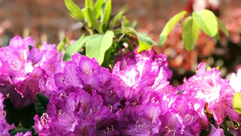 Ben je een tevreden tuinier van je eigen bloementuin?